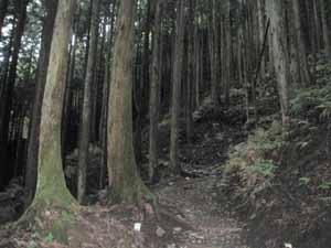 バカ尾根山道